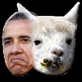Obama or a Llama