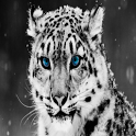 White Tiger HD Wallpaper icon
