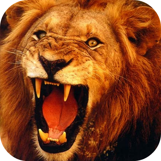 Lion 3d Live Wallpaper On Google Play Reviews Stats