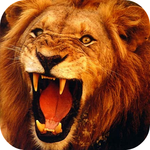 Lion King Live Wallpaper For Android The Best Lion Of 2017