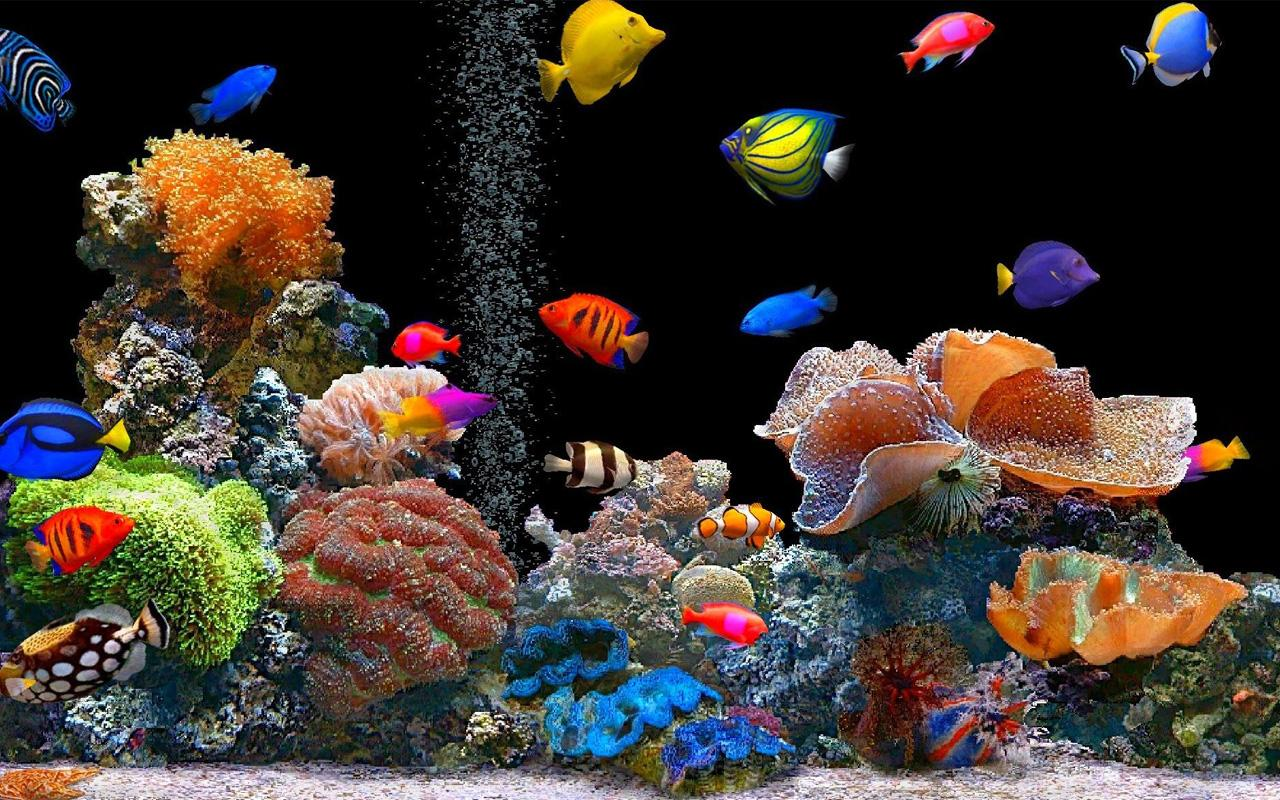 Fond ecran hd aquarium joy studio design gallery best for Fond ecran gratuit aquarium