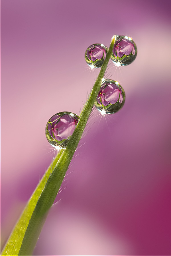 Just for you by Citra Hernadi - Nature Up Close Natural Waterdrops