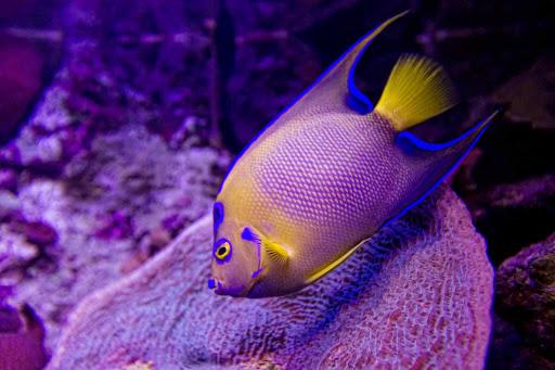 Playa-del-Carmen-Xcaret-Aquarium2 - The Aquarium at Xcaret Park, south of Cancun, Mexico.