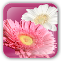 FlowerPaint Live Wallpaper Pro icon
