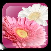 FlowerPaint Live Wallpaper Pro