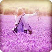 Romantic Lavender Theme