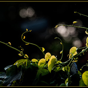 Dancing Nature by Subhasis Ghosh - Nature Up Close Leaves & Grasses ( wilderness, nature, plants, nature close up, leaves )