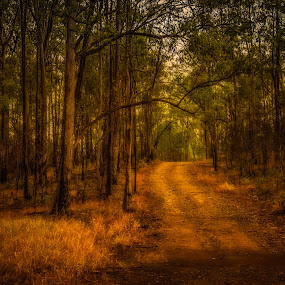Pathway into the Bush by Esther Visser - Landscapes Forests ( , path, nature, landscape )