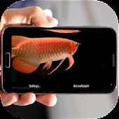 Arowana Fish LiveWallpaper