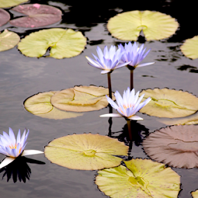 Beauty on the water by Todd Young - Flowers Flower Arangements