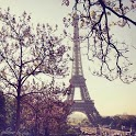 Romantic Paris Wallpaper icon