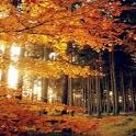 Beautiful Autumn Wallpaper icon