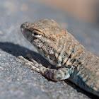 unknown baby lizard