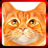 Kitty Meow-meow