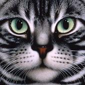FIND THE CAT 2 (НАЙДИ КОТА 2)