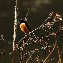 Birds of North East India, Bhutan and Bangladesh