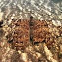 Cracker Butterfly-Pororó