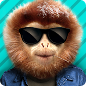 What monkey?