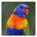Parrot Sounds icon