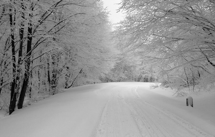 The winter run by Vladimir Bogovac - Landscapes Weather ( winter, snow, bw, forest, road, , relax, tranquil, relaxing, tranquility )