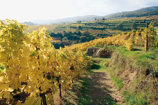 vineyards-near-krems - Vineyards near Krems an der Donau (Krems on the Danube), Austria.