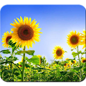 Sunflower HD Photography logo