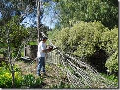 David chainsawing a tree
