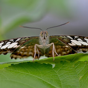 ready for takeoff by Scot Gallion - Animals Insects & Spiders ( animal, butterfy,  )