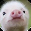 Cerdo Cerdito Sonido Broma icon