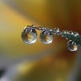 Shine by Dedy Haryanto - Nature Up Close Natural Waterdrops