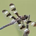 Dragonfly (8)