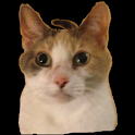 Don't Shake The Cat icon