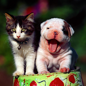 Best friends cat and dog LWP