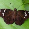 Black Flat - female