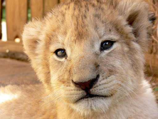 Animals Wallpapers 2015