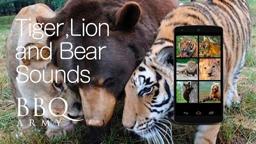 Animal Sound Tiger Lion Bear