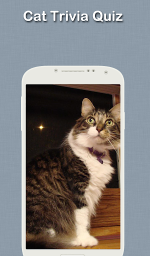 貓問答游戲