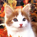 Cute Cats Live Wallpapers icon