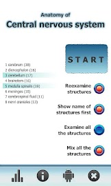 Anatomy Star - CNS (the Brain) Screenshot 7