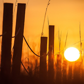 Over the Fence by Shelley Patterson - Landscapes Sunsets & Sunrises