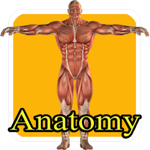 Apk file download  Aprende anatomia humana niños 36  for Android 1mobile