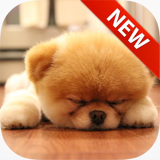 Sleeping Puppy Wallpapers 個人化 LOGO-阿達玩APP
