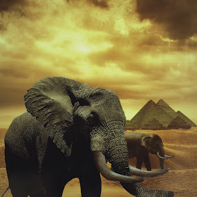 Elephants of Pharoah by Karazy Shooke - Digital Art Animals ( pharoah, ancient, desert, elephant, dune, digital art, piramid, manipulation )