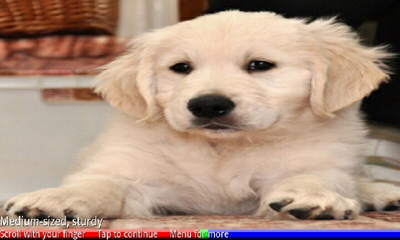 Puppies and Dogs- screenshot