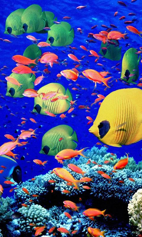 aquarium live wallpapers android apps auf google play. Black Bedroom Furniture Sets. Home Design Ideas