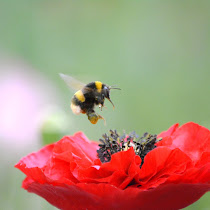 Italy's flora and fauna