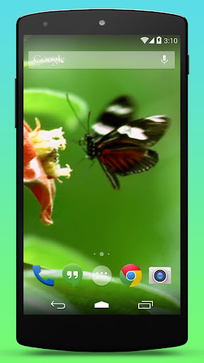Real Butterfly Live Wallpaper