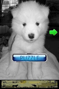 Dog Puzzle: Samoyed - screenshot thumbnail