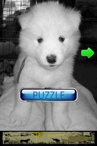 Dog Puzzle: Samoyed- screenshot