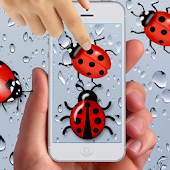 Transparent Lady Bug Smasher